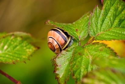 Sniglarna är fortfarande vakna. / The snails are still awake.